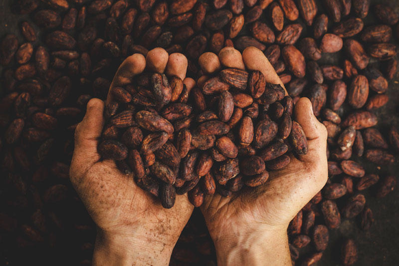Foodie Palabras superfoods cacao